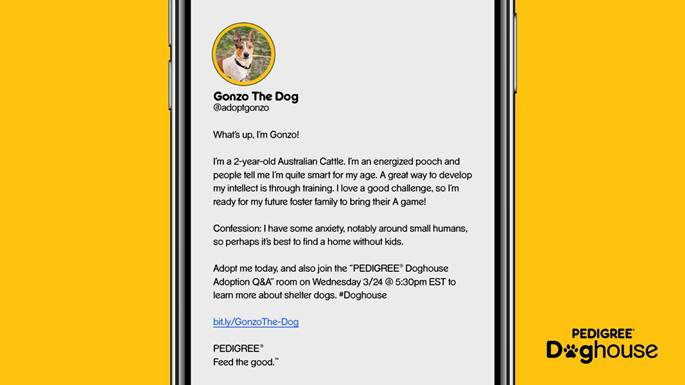 Pedigree Doghouse: Gonzo the Dog (@AdoptGonzo), an Australian cattle dog, asks people to adopt him.