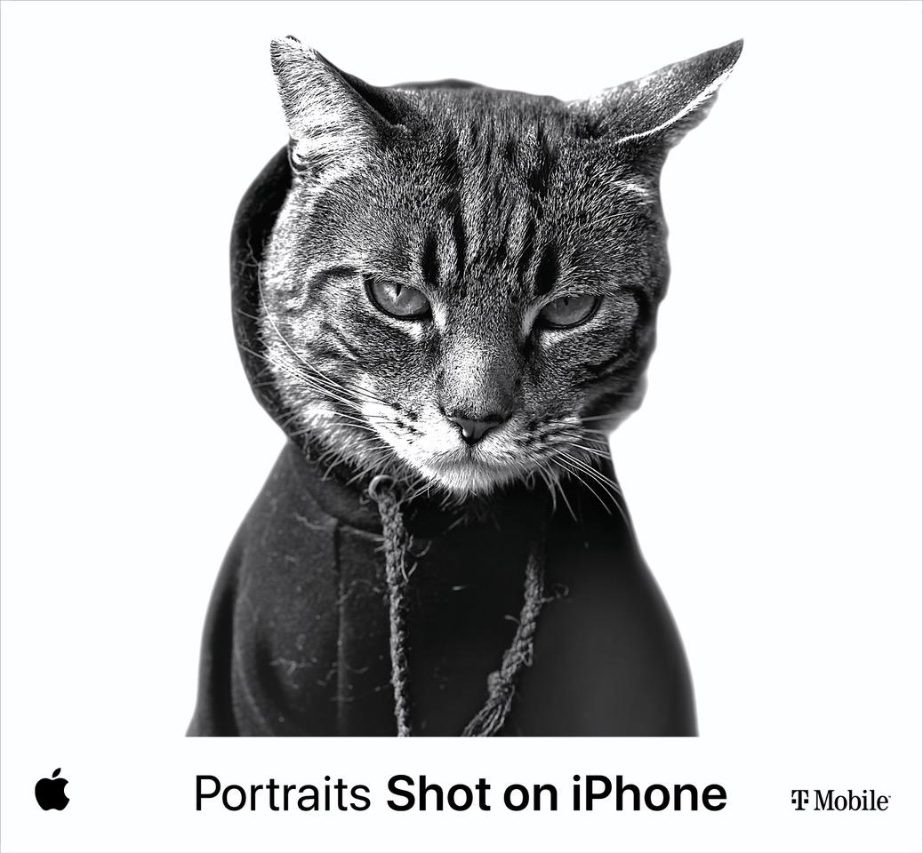 Apple Cat Nocito