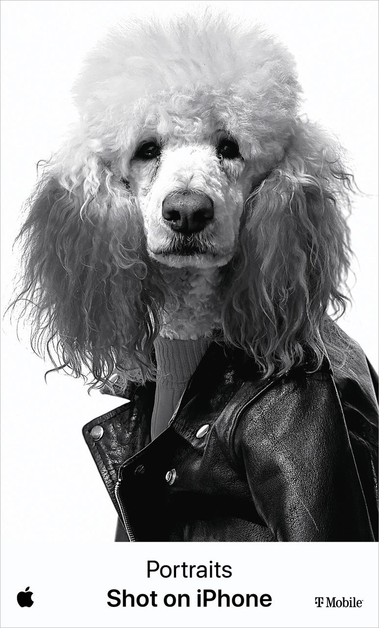 Apple Nocito Poodle