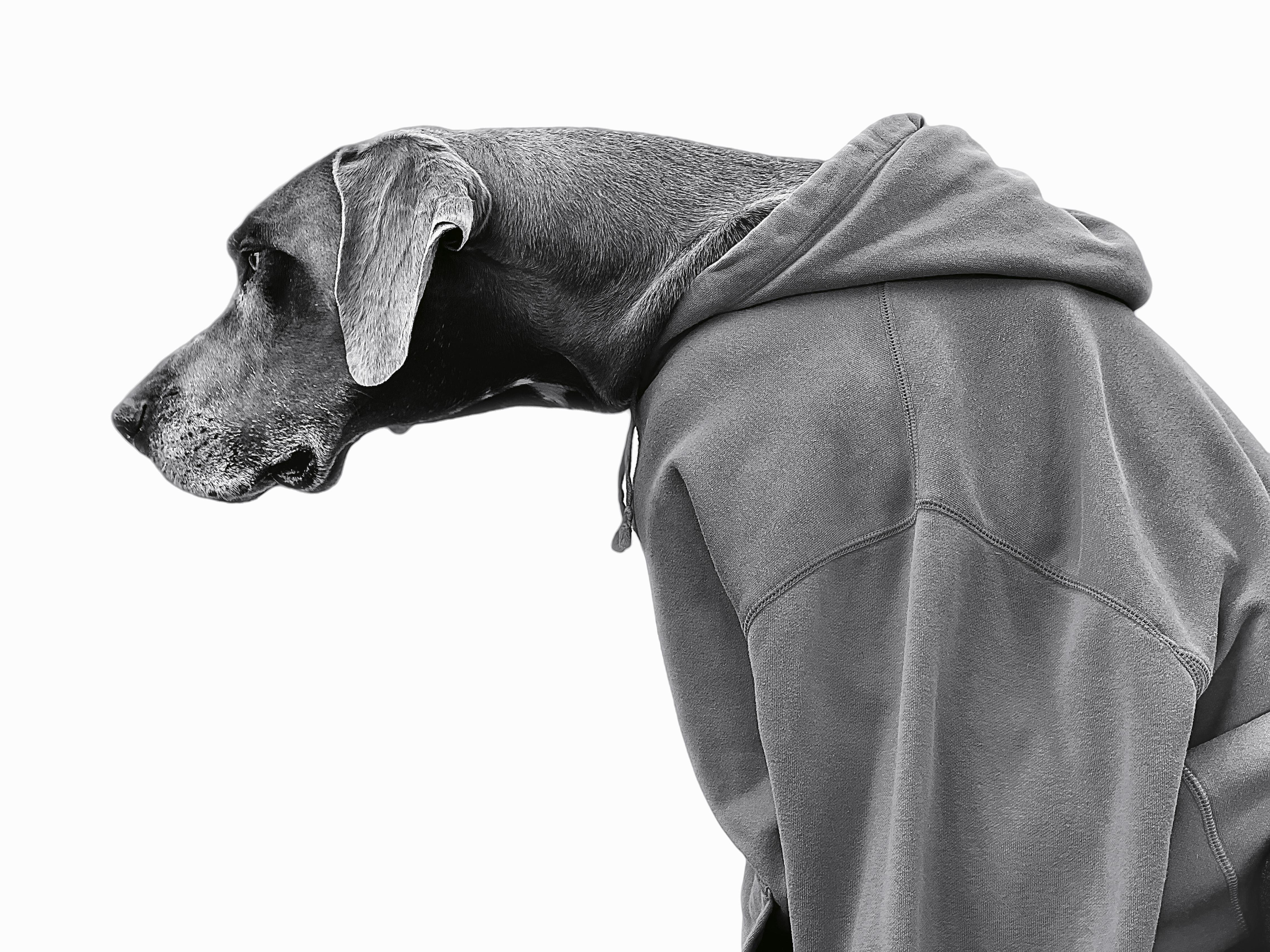 Apple Nocito Dog