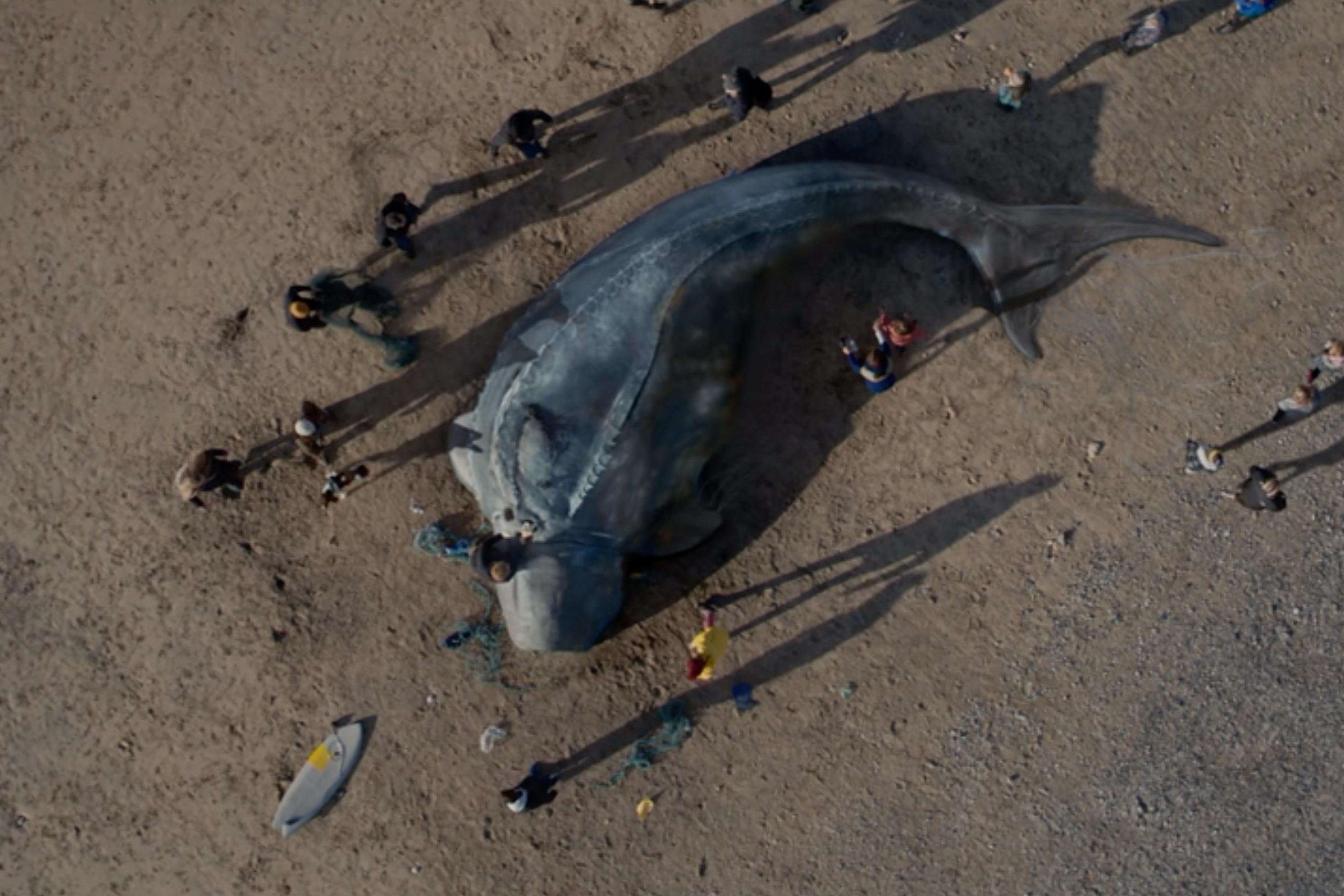 Surfers Against Sewage: Creature