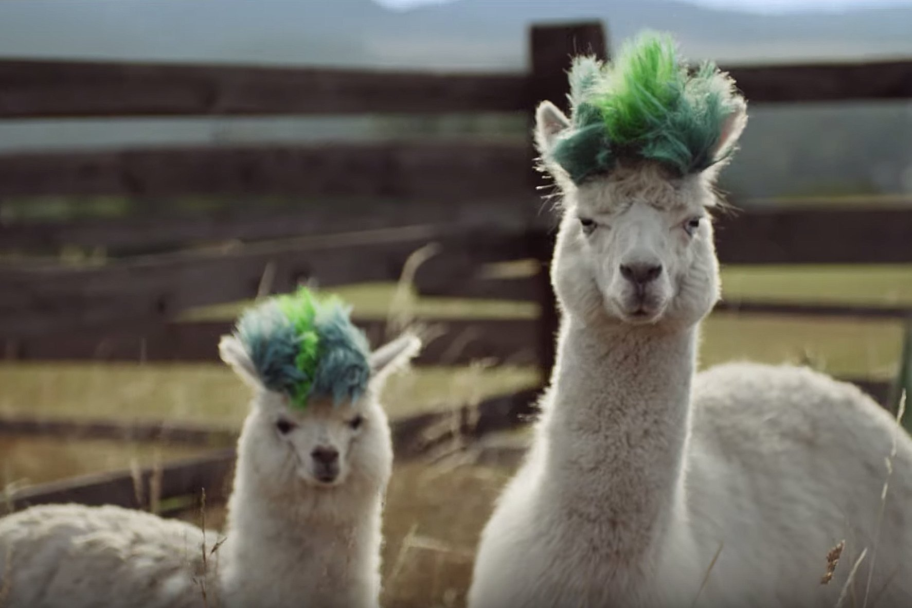Watch the newest commercials on TV from Samsung, Campbell's, Pizza Hut and more