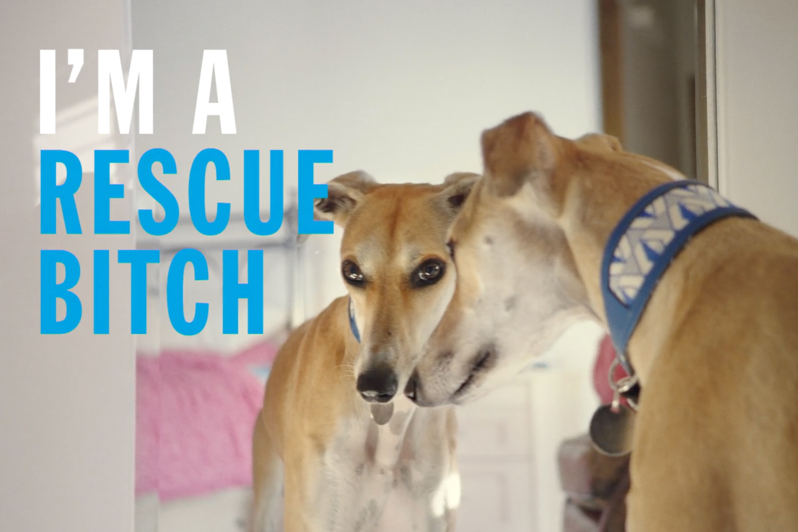 Battersea: Rescue is our favorite breed