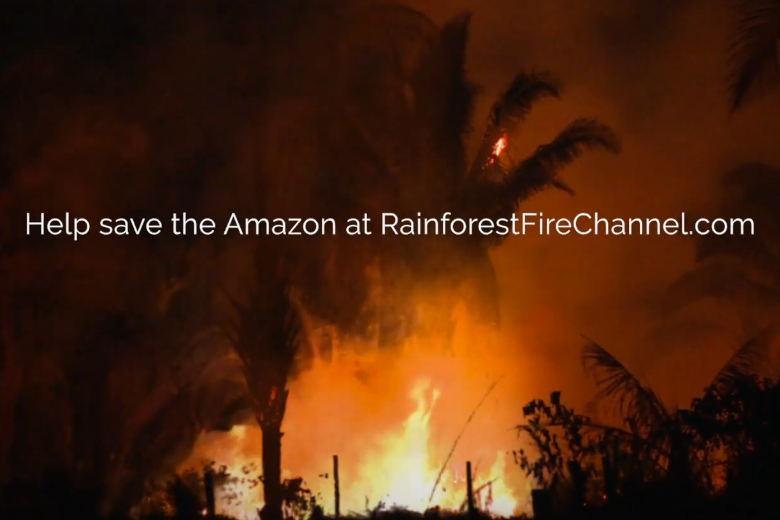 The classic burning yule log becomes a blazing rainforest in PSA on plight of Amazon