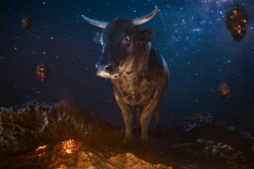 MoneySuperMarket: Bull