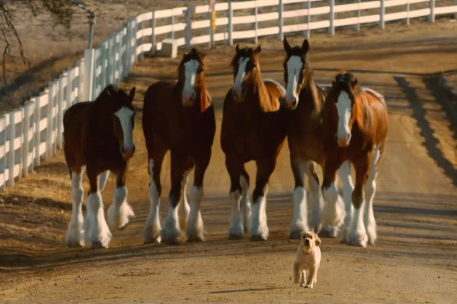 Budweiser's puppy is back in ad luring drinkers to bars