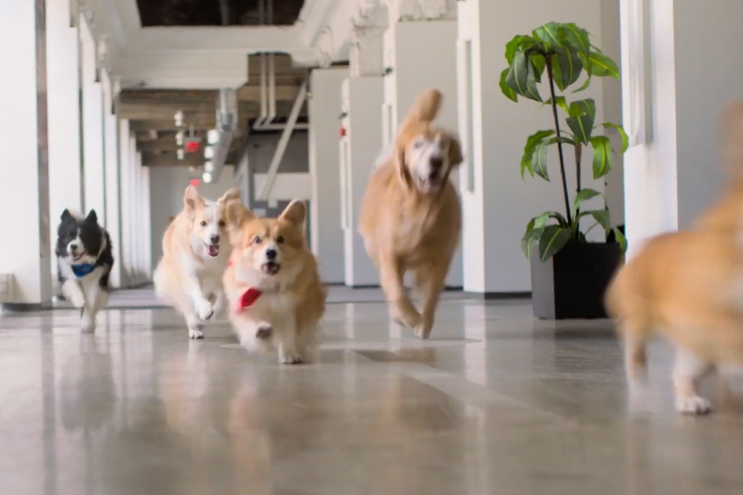 Watch the newest commercials on TV from Billie, Capital One, Triscuit and more