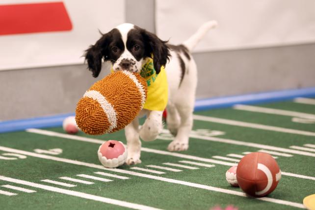 Now You Can Watch The Puppy Bowl in Virtual Reality