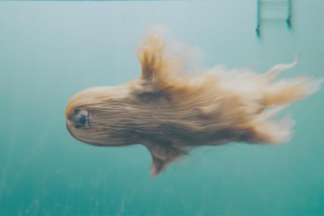 Mesmerizing Video of 'Mermaid' Afghan Dog Is Testament to the Power of an Instagram Post