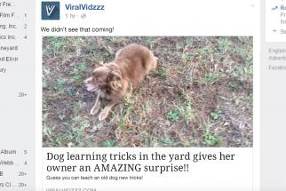 Lawn Doctor Viral Video