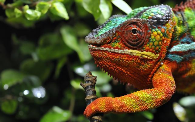 Meet Adland's Career Chameleons