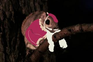 Christmas Price Index 2014: 10 Squirrel Lords a Leaping