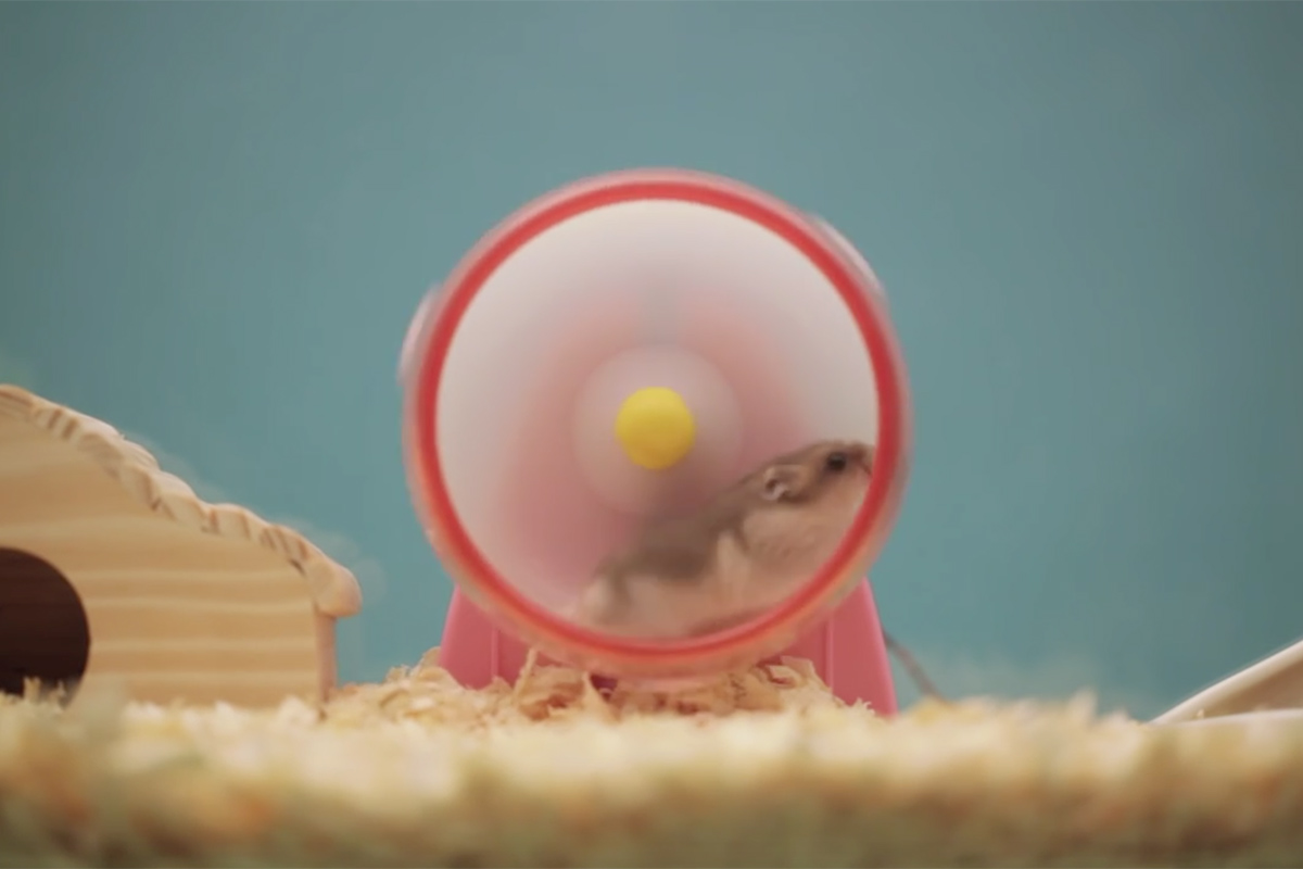 Life Is Electric - Hamster