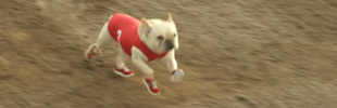 Go Run -- Super Bowl XLVI