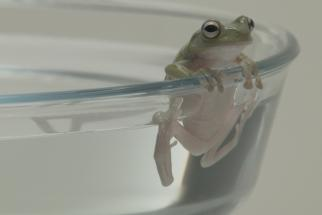The Boiling Frog Myth