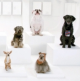 How Volkswagen Conducted Its Canine Chorus