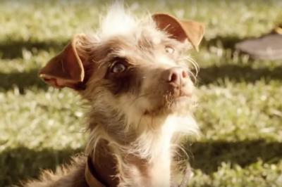 Bud Light - Rescue Dog