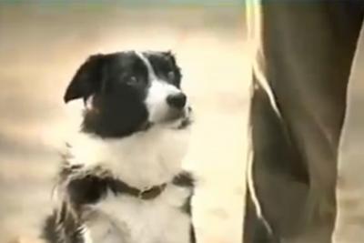 Bud Light - Good Dog