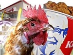 Poultry-Food Giants Market Against Avian Flu Panic