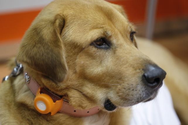 Lowdown: Wearable Tech Goes to Dogs, Red Stripe Repatriates