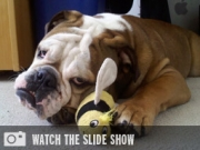 The Mutts of Marketing: An Ongoing Slideshow