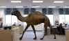 Counting Down the Best Ads of 2013: 'Hump Day!'