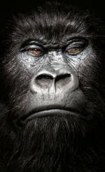 It's a Tie: 'Halo,' 'Gorilla' Share Film Grand Prix