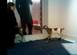 Goats Invade Offices of JWT