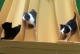 Just FYI, an L.A. Ad-Tech Company Holds Kitten Races in Its Offices