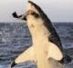 How 'Shark Week' Went Rogue
