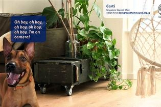 SPCA's backgrounds let you choose a shelter pet to accompany you in your video calls