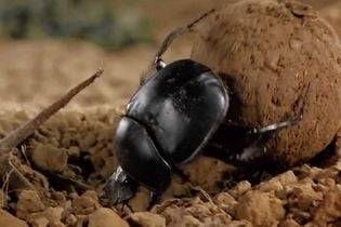 This ode to a dung beetle is an ode to small agencies