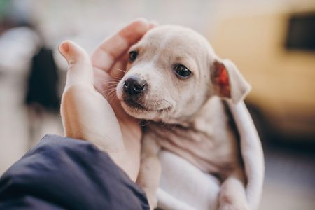 Pandemic puppy shortage shows market going to the dogs—in a good way