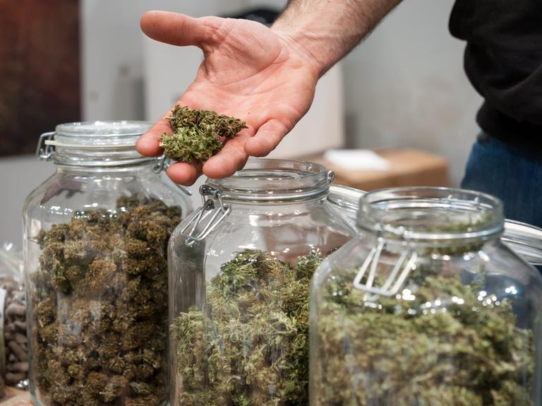 Study finds more Hispanics than non-Hispanics view cannabis as beneficial