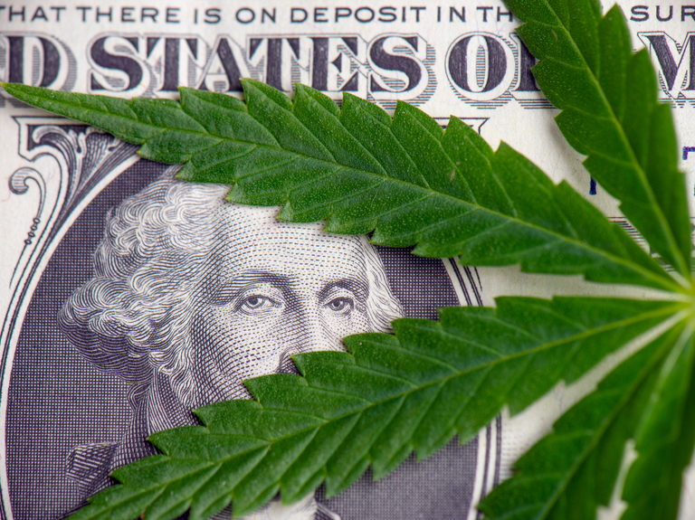 Weed-tech startup raises $16 million