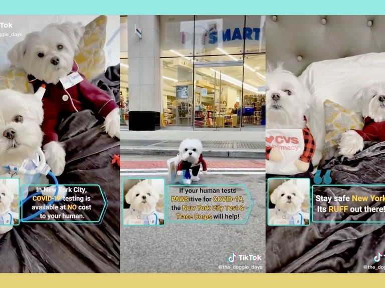 NYC hospitals adopt influencer strategy to promote COVID testing, complete with Misty Copeland and dogs