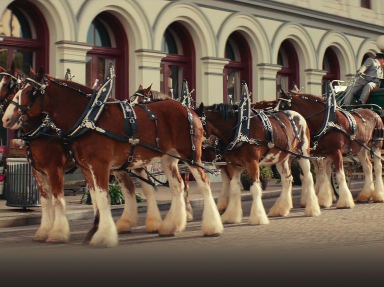 Sam Adams spoofs Budweiser's Super Bowl Clydesdales