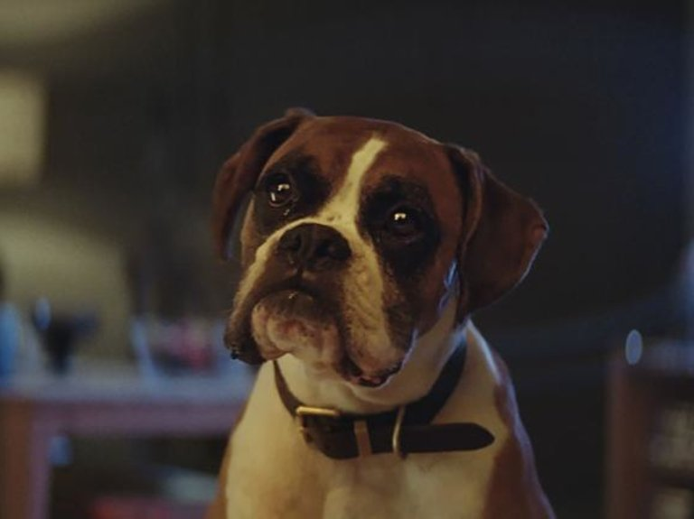 Could John Lewis's 'Buster the Boxer' Be the Last of the Real Ad Animals?
