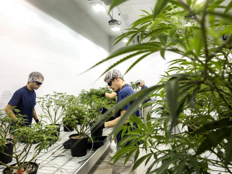 Marijuana bet paying off for alcohol giant Constellation Brands