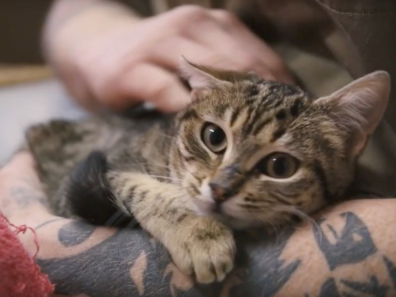 Prison cats, a military kitty and a mountain-climbing feline star in Sheba's documentary series