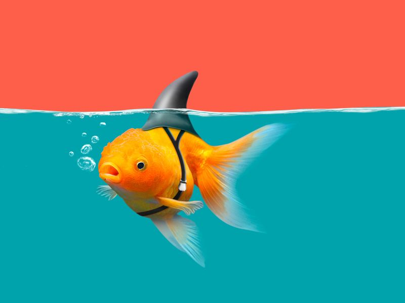 Why smaller agencies are winning big by Jeff Rosenblum | Ad Age