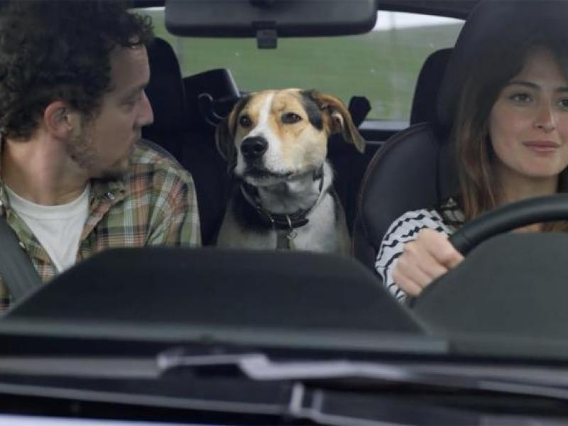 Nfl Averse Dog Friendly Ad Strategy Powers Subaru Surge Adage