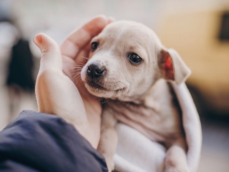 Pandemic puppy shortage shows market going to the dogs—in a good way | Ad  Age