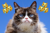 Remembering Grumpy Cat's prolific advertising career—from Friskies to Grumppuccino
