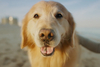 Inside WeatherTech's Super Bowl ad supporting animal cancer research
