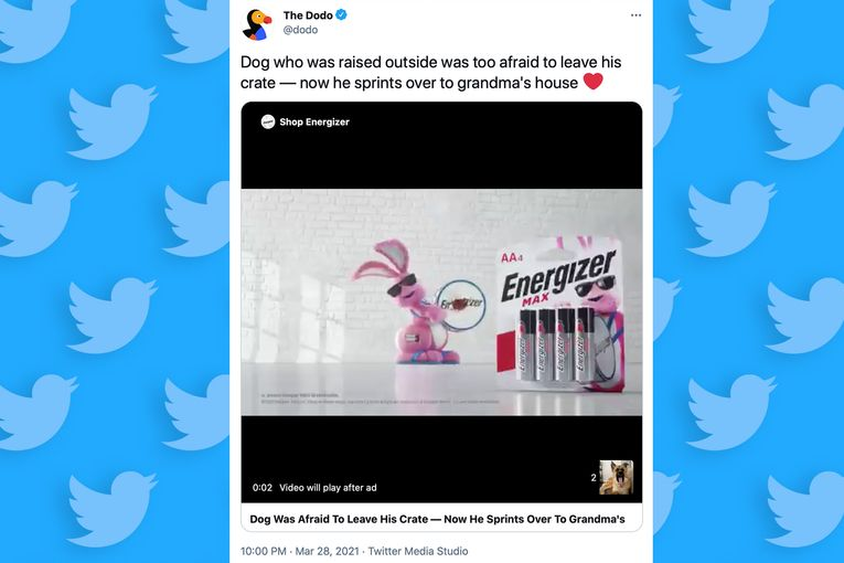 Twitter opens a wholesome videos section where brands can feel protected