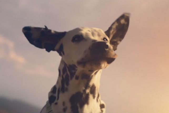 Watch Budweiser's Bob Dylan-backed Super Bowl ad touting wind power