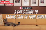 BuzzFeed Is About to Take Branded Cat Videos to a Whole New Level