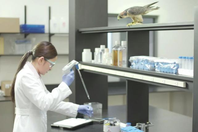 Corning Life Sciences Shows It's for the Birds