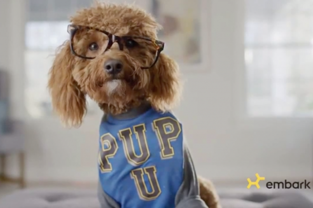 Watch the newest commercials on TV from Xbox, Experian, Embark DNA and more